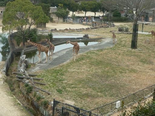 4-zoo (1).JPG