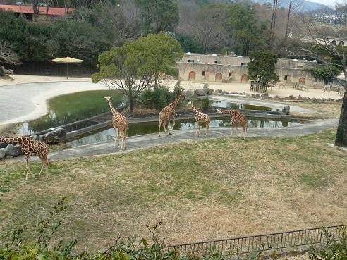 6-zoo (2).JPG