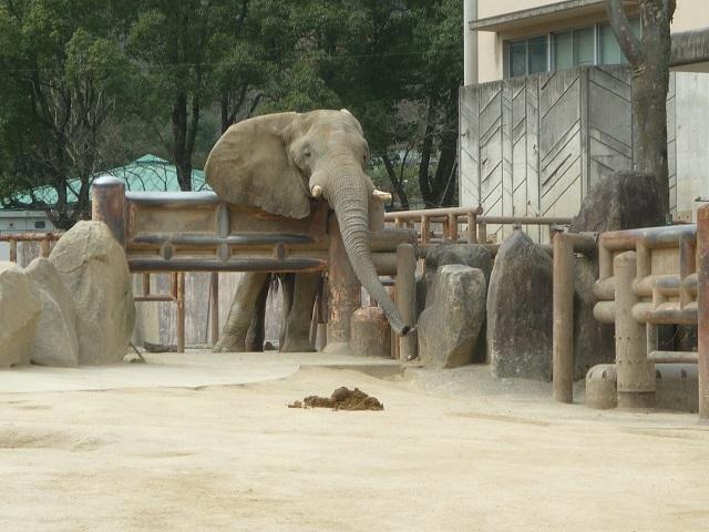 6-zoo (3).JPG