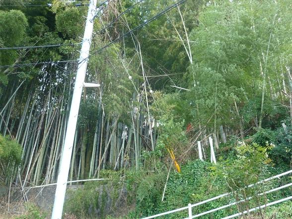 田舎を散歩 (11).JPG