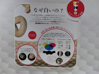 シロヘビ (4).JPG